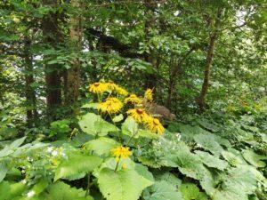 флора тебердинского заповедника